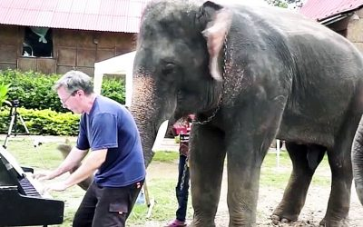 When This Elephant Heard Music Playing He Came Over And Did Something That Stunned Everyone!