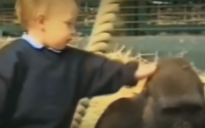 THIS Little Girl Tries To Pet The Gorilla. Moments Later The Unexpected Tore My Heart Up!