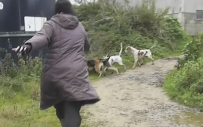 She Spots A Helpless Fox Being Attacked By A Pack Of Hounds. Her Reaction Puts Her Life At Risk!