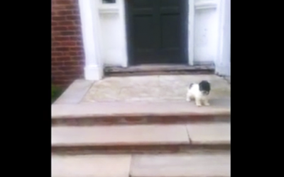 Nervous Little Pup Figures Out an Adorable Way Down The Steps