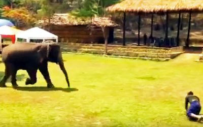 An Elephant Notices His Human Fall On His Face In Pain. How She Reacts The UNTHINKABLE!