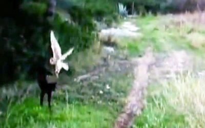 Camera Caught An Owl Swooping Down On Top Of This Cat. But When It Zooms In My Jaw Dropped!