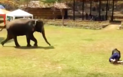 Person Suddenly Collapses Onto The Grass. What This Elephant Does Seconds Later WOW!