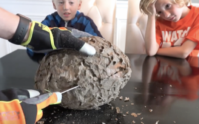 Dad Slices Open A Wasps Nest In Front of Them. What He Reveals Inside Is So Awesome!