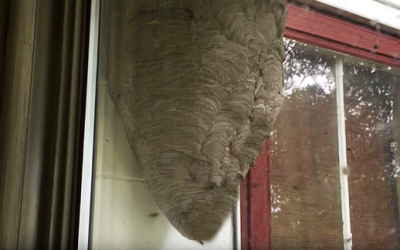 This Guy Woke Up To A Strange Tapping Noise On His Window. What He Saw Outside Terrifying!