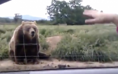 This Lady Waves At A Bear As They Drive By. But How It Reacts OMG!