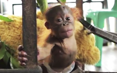 This Baby Was Stolen From His Mother. Now Watch His Response When He's Rescued!