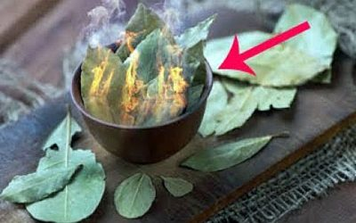 The 2 Incredible Benefits of Burning and Vaporizing Bay Leaves In Your House!