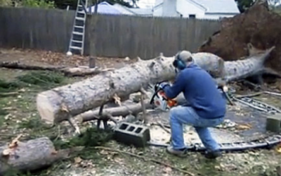 Man Slices This Old Tree Taken Down By Large Storm