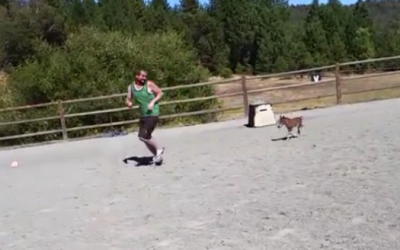 An Adorable Mini Horse Chases This Guy