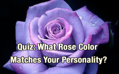 Quiz: What Rose Color Matches Your Personality?