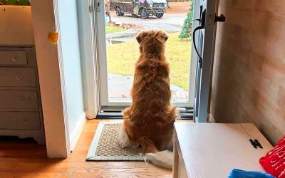 The Family Dog Begins Acting Super Strange. They Look Out The Window and Immediately Call 911!
