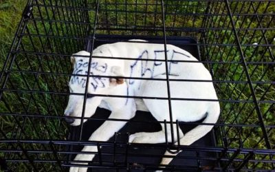 They Spot A Puppy Alone In a Rusty Cage At The Park. Then They See This Disturbing Message Written On His Head