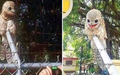 This Weird and Strange Potoo Muppet Bird Creature Has Been Filmed and Photographed In Daylight