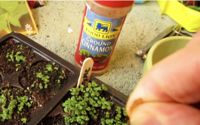 A Cinnamon Gardening Life Hack Everyone Should Know