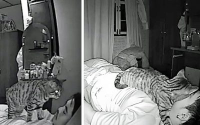 He Set Up a Hidden Camera To Catch What His Kitty Does While He Is Asleep and It's Hysterical