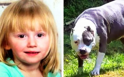 Neighbors Swing The Door Open and Find The 2-Year-Old Who Went Missing For Days Guarded By a Pit Bull