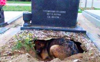 Everyone Thought THIS Dog Was Guarding Her Humans Gravesite. But Then This Rescuer Discovers an Unthinkable Secret!
