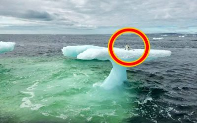 Fishermen On This Boat Spotted What They Thought Was a Seal But They Approached It and Got a Closer Look!