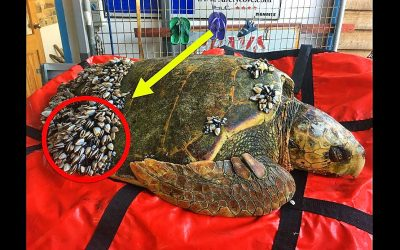 Fishermen Noticed This Strange Turtle Floating In The Ocean. Then They Saw He Needed Help Immediately!