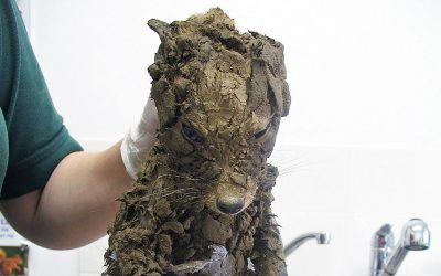 Guys Were Working When They Spot a Puppy Covered In Mud. But When They Wash Him Off They Get an Unthinkable Surprise!