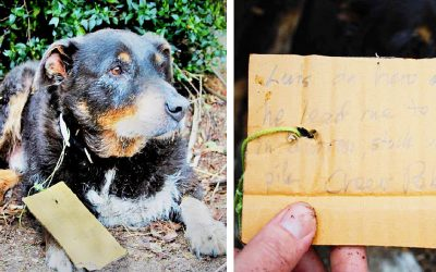 THIS Strange Dog Collapses At Their Front Door! Then They Spot a Letter On His Collar and Run Immediately To a Phone!
