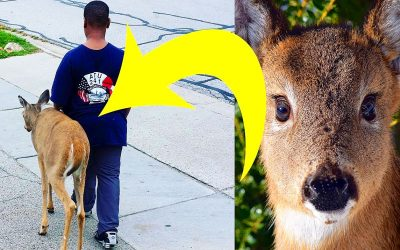 Neighbors Spot a Strange Boy Walking Beside This Deer Everyday