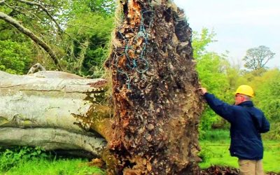 A Huge Storm Took Down THIS Giant Tree. Then Scientists Uncover an UNTHINKABLE Surprise Under It!