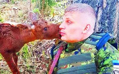 Baby Moose Confronts Soldier In The Woods Then Desperately Tries To Tell Him a Message.