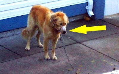 Neighbor Sees This Pup With His Snout Duct Taped. So He Breaks Into The Yard and Does The UNTHINKABLE!