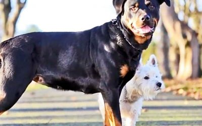 These Dogs Have An Adorable Litter Of Puppies.